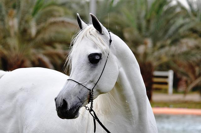 Современные лошади пришли с Востока