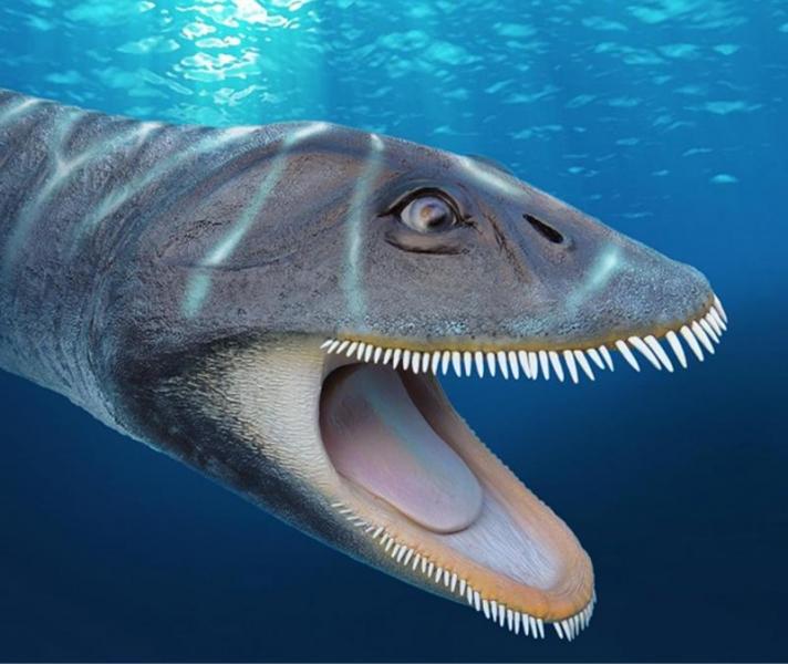 В доисторических морях водился «драконокит»