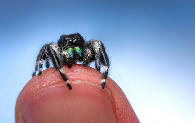 Змей и пауков мы боимся с рождения