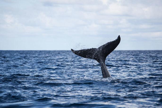 Песни китов похожи на джаз