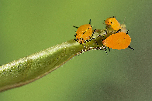 Смертельные мутации помогают выжить