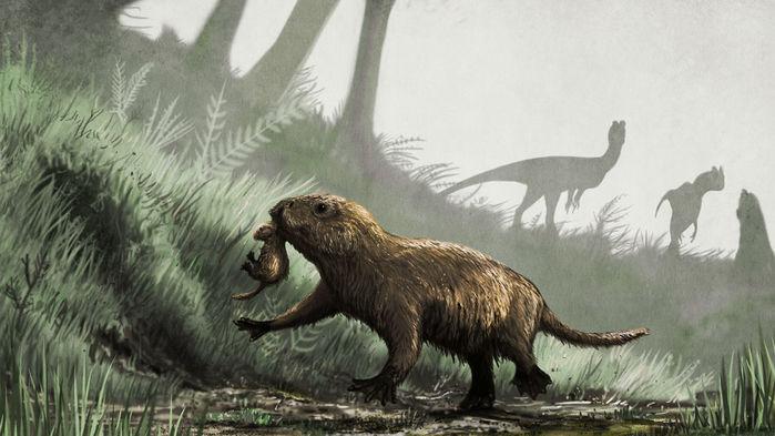Когда звери вышли на дневной свет
