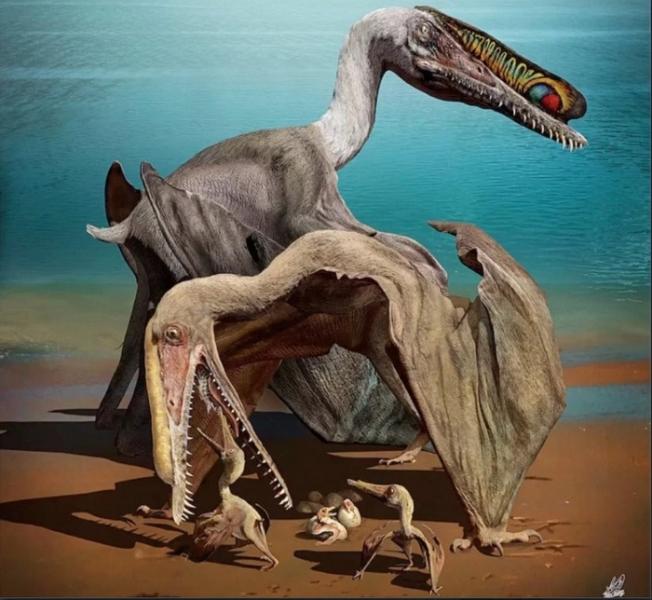 Птерозавры могли заботиться от своих «птенцах»