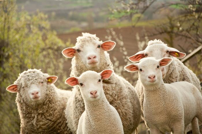 «Фантастические твари»: животные, которые удивили нас в 2017 году