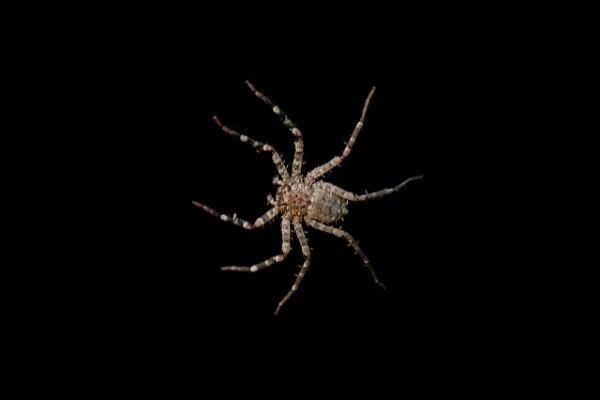 Самый быстрый паук в мире