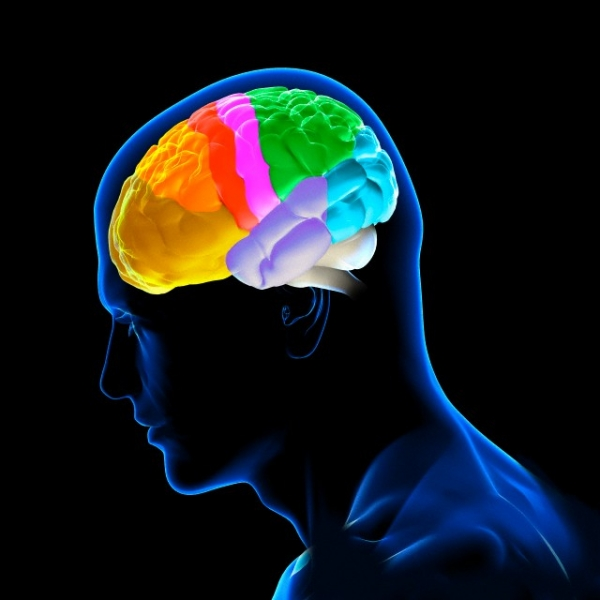 Рабочая память подчиняется бета-ритмам