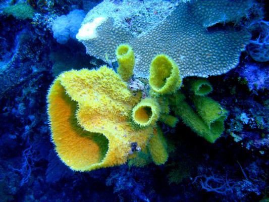 Молекулу из морских губок усовершенствовали против рака
