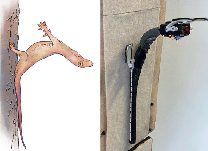 Прыгающие гекконы приземляются на хвост